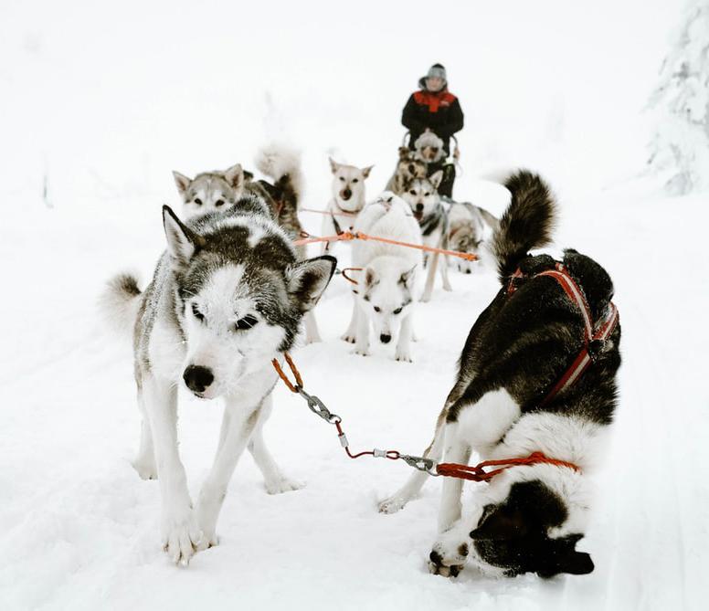 Meeker Sled Dog Race