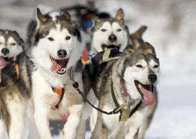 Meeker sled dog races