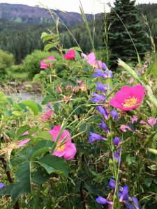 wildflowers in the Flat Tops Wilderness Area